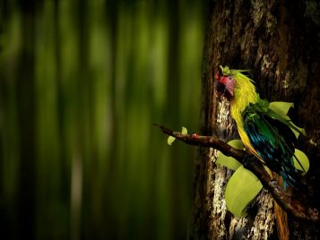 Hairy_Parrot_Sitting_on_Tree1920x1440