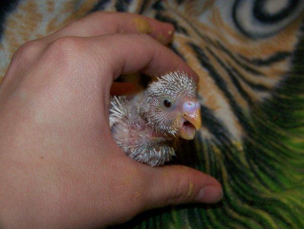 Фото: parrots4life