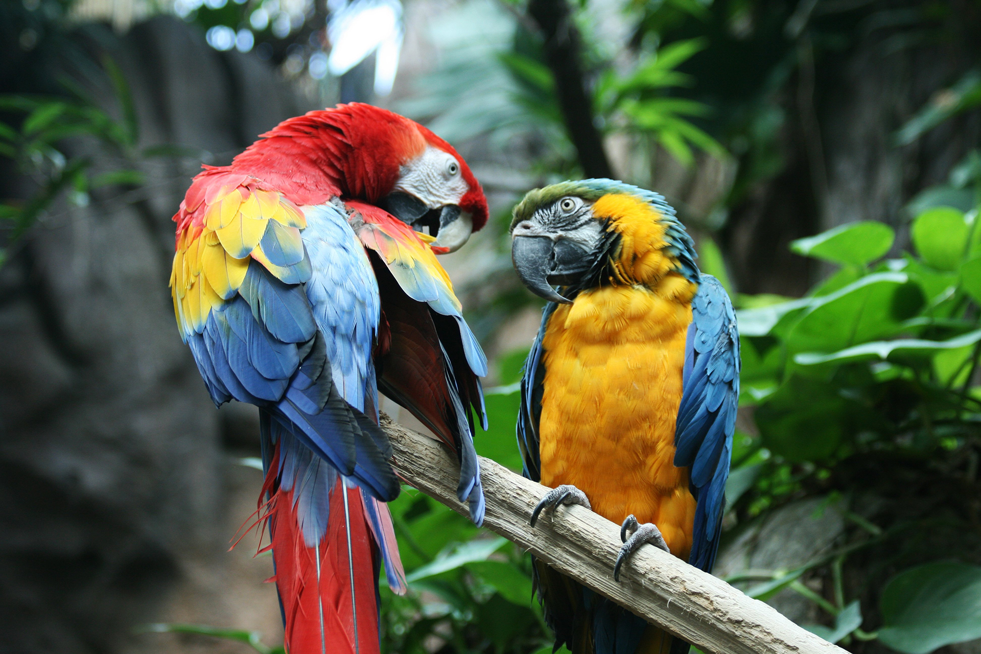 Macaw-Parrot-HD-Wallpapers-Tropical