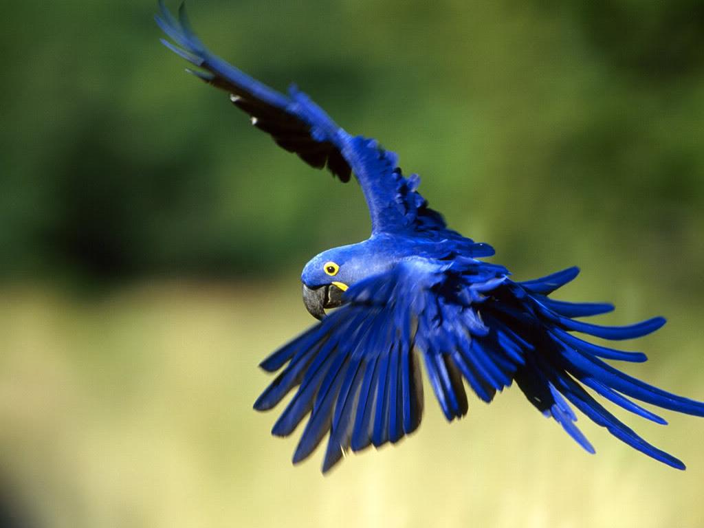 macaw_by_lucy_liu-d4o80x3