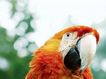 nice-parrot1280x960