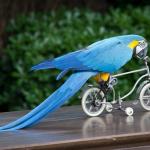 Наглый попугай чуть не сорвал заезд велогонщика