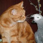 Обзор приложений для обучения попугаев