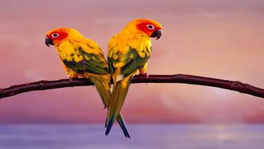 Two-Colorful-Parrots-Sit-Crossing-on-Branch1280x720