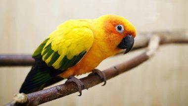 веселый папугай1024×576