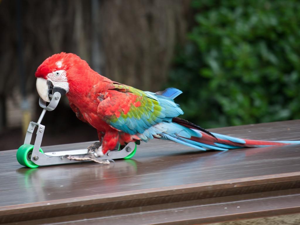 прикольные попугаи фото клика соответствующий раздел