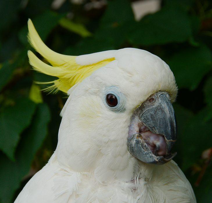 попугаи какаду фото