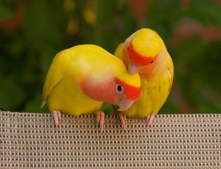 фото птицы парами