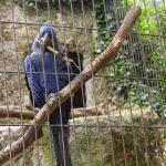 Вольер для попугаев