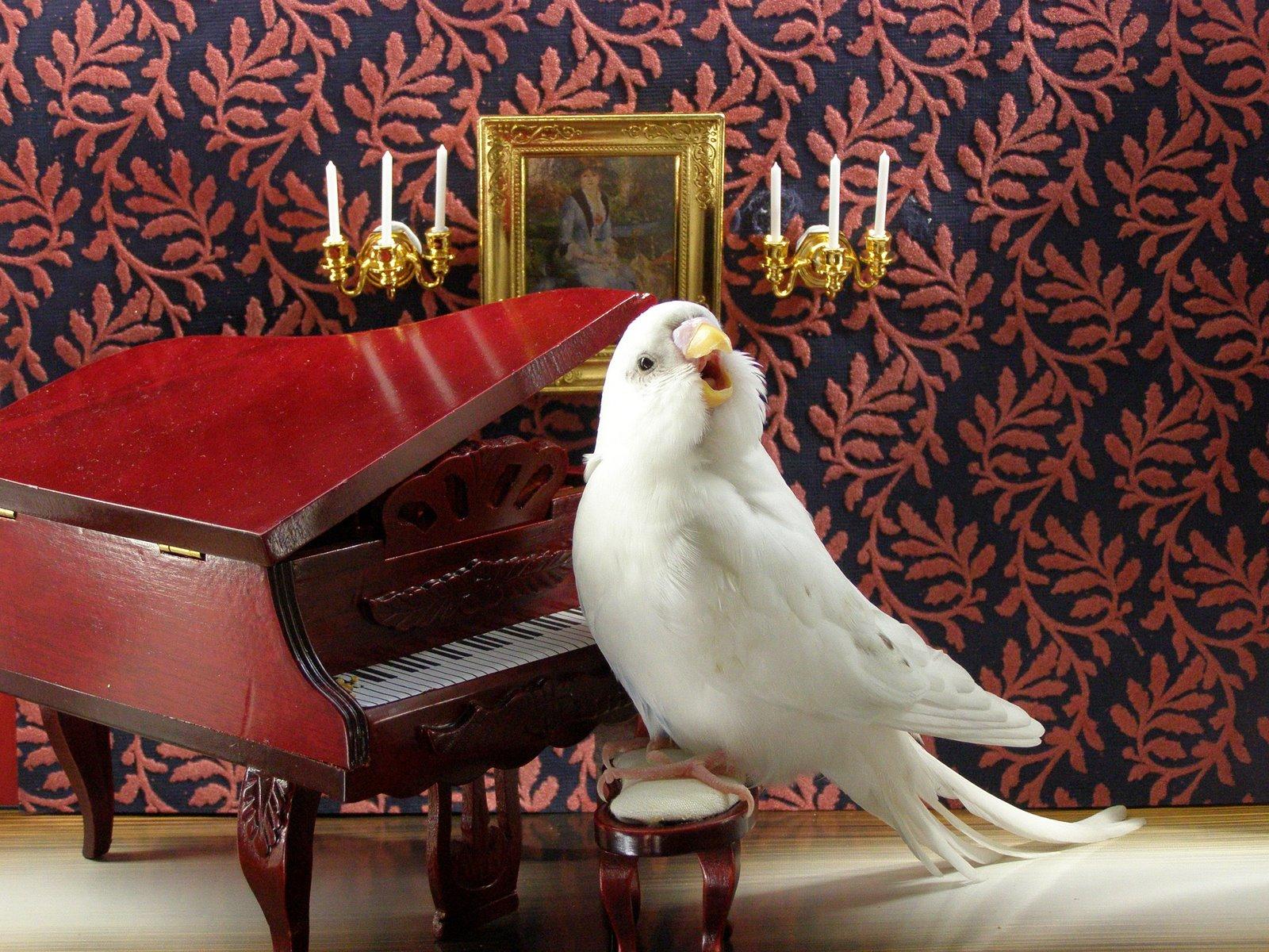 Смешная картинка с попугаем
