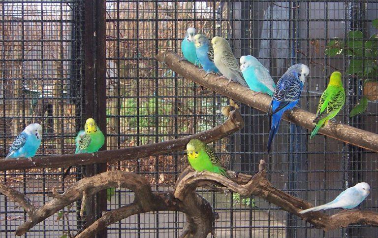 Скачать звуки попугая