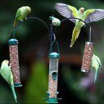 Кормушки и поилки для попугаев