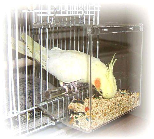 Попугай раскидывает корм из кормушки почему