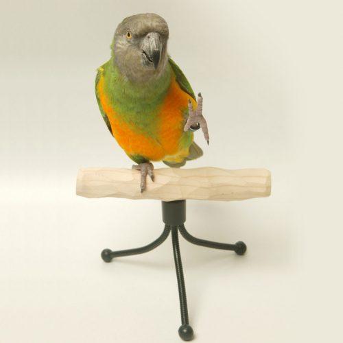 Фото: parrotwizard