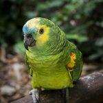 Где купить попугая?