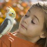 Попугаи и дети