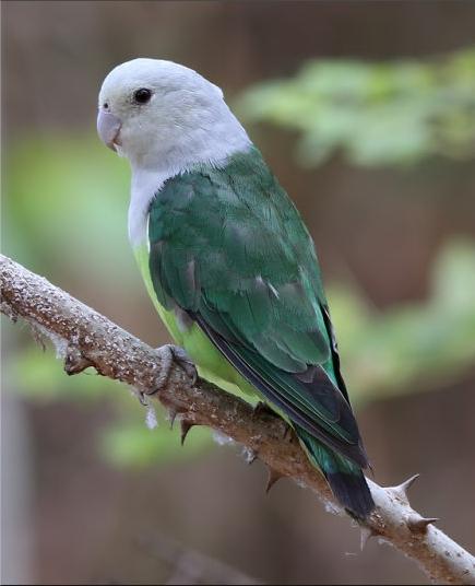 Фото: burung.id