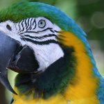 В древнем захоронении обнаружена мумифицированная голова попугая ара