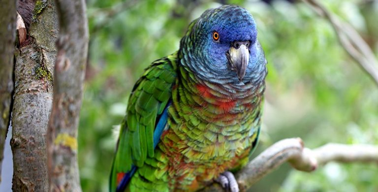 Фото: act-parrots.org