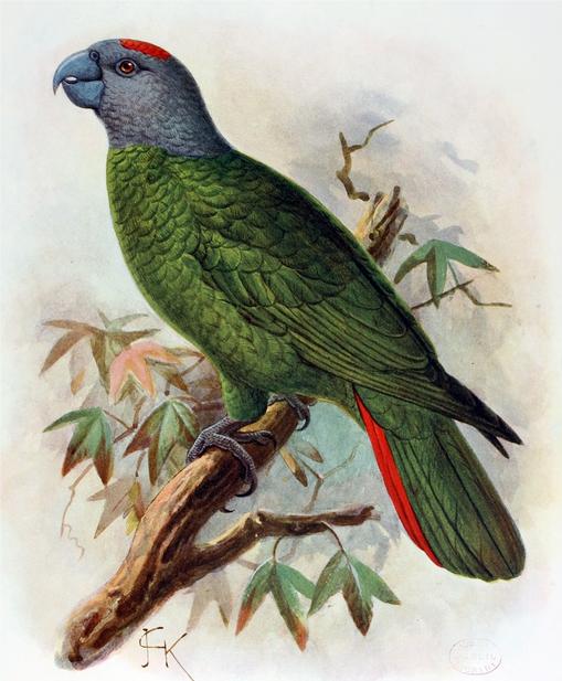 Фото: en.wikipedia
