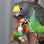 Товары для попугаев: необходимый минимум и дополнительные аксессуары