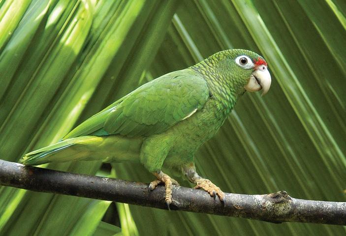 Фото: parrots.wikia