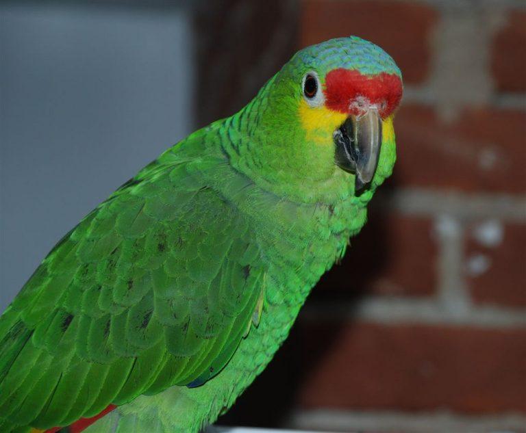 Фото: parrotplay