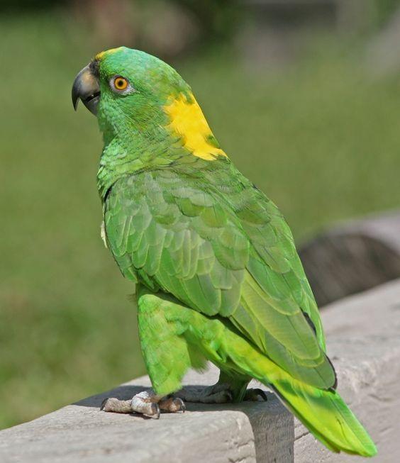 Фото: birdphotos.com