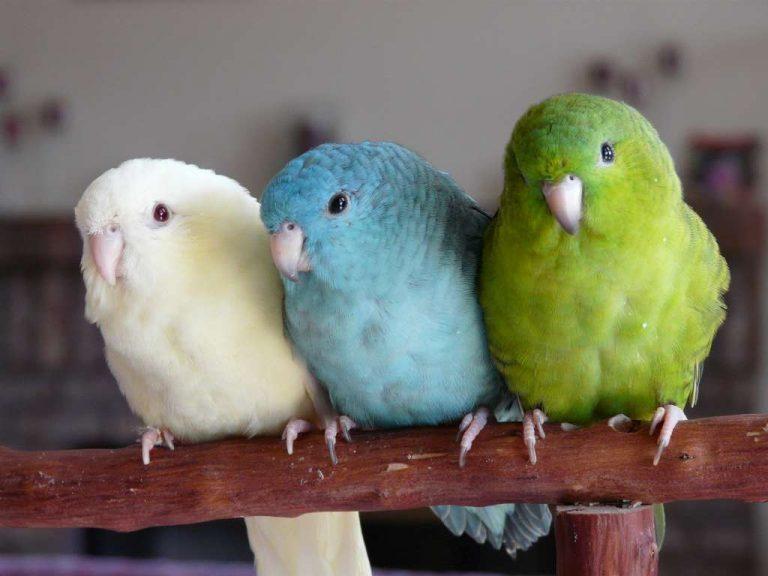 Фото: Я люблю попугаев