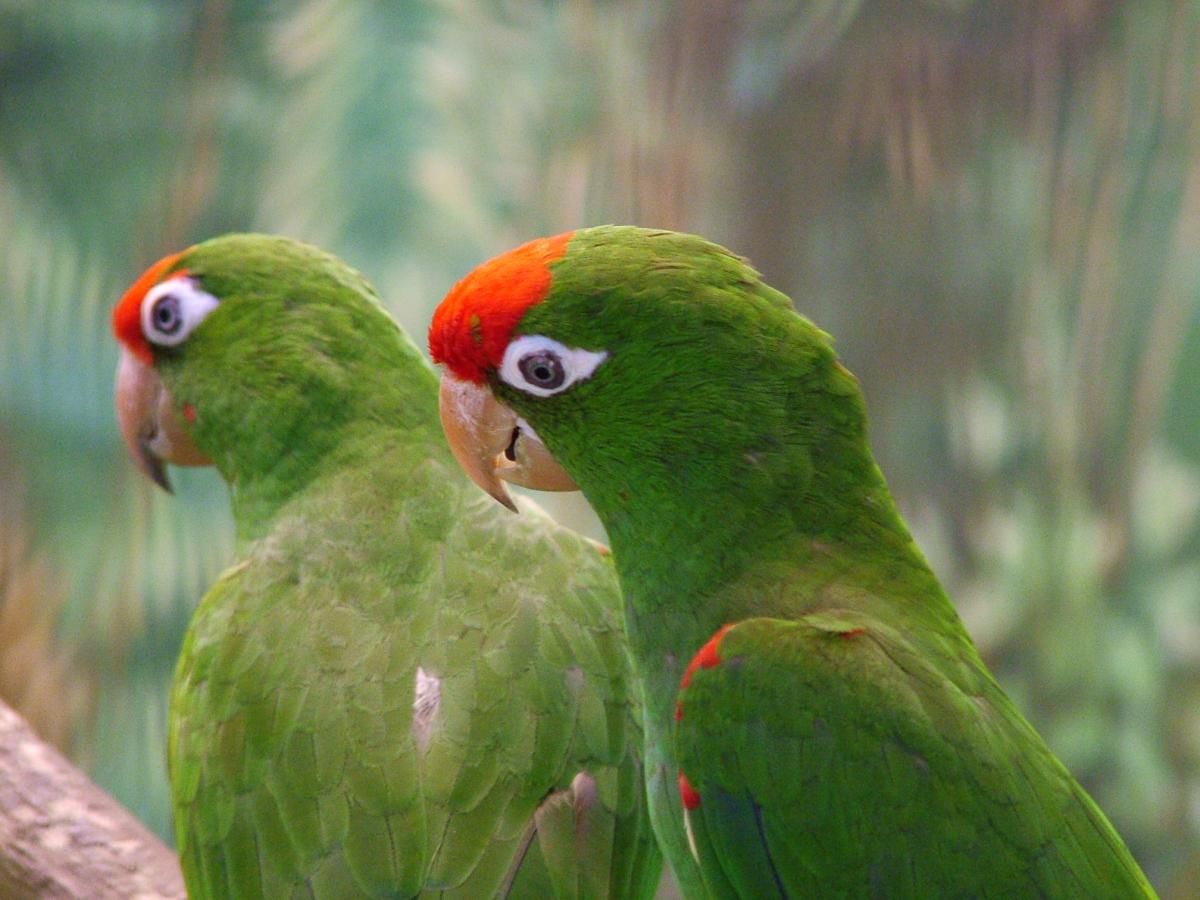 болезни попугаев фото и название болезни